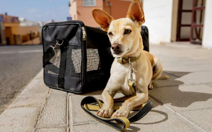 Cachorro caramelo e mala - Dúvidas dos viajantes