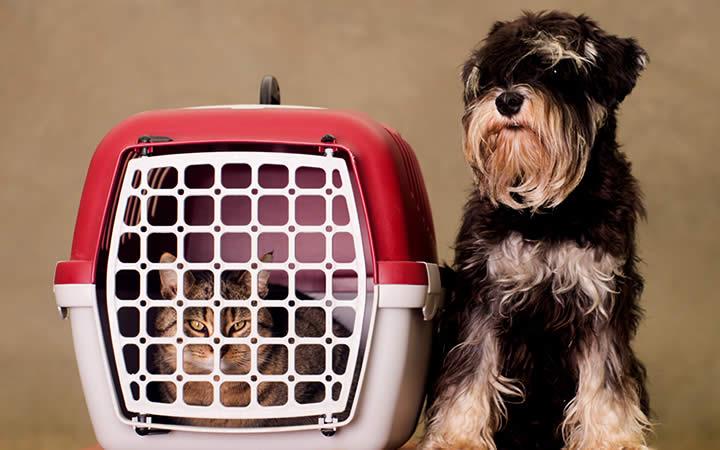 Pet em caixa de transporte
