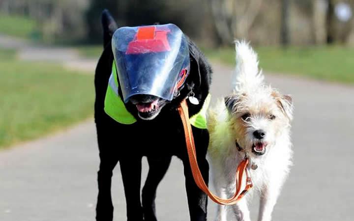Cachorros caminhando