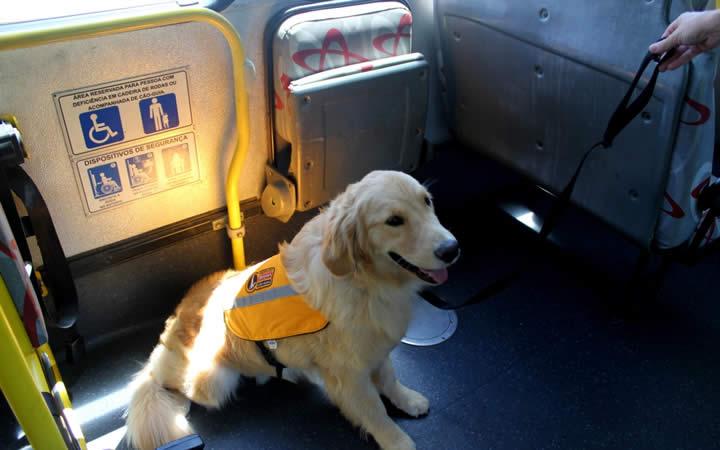 Cão Guia sentado em ônibus