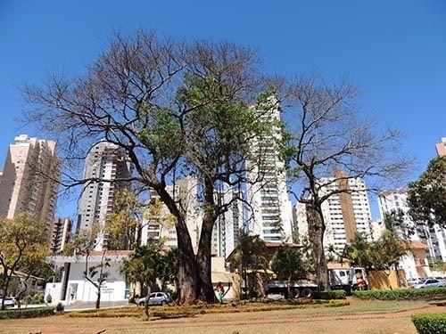 St Bueno Goiânia GO